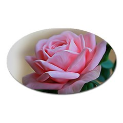 Rose Pink Flowers Pink Saturday Oval Magnet
