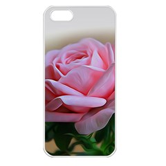 Rose Pink Flowers Pink Saturday Apple Iphone 5 Seamless Case (white)