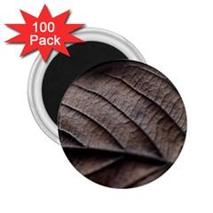 Leaf Veins Nerves Macro Closeup 2 25  Magnets (100 Pack)