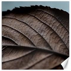 Leaf Veins Nerves Macro Closeup Canvas 12  X 12