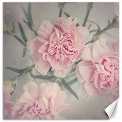 Cloves Flowers Pink Carnation Pink Canvas 12  X 12