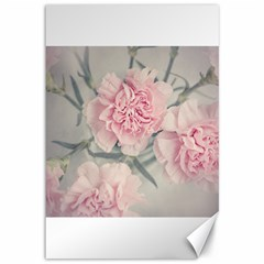 Cloves Flowers Pink Carnation Pink Canvas 12  X 18