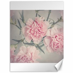 Cloves Flowers Pink Carnation Pink Canvas 36  X 48