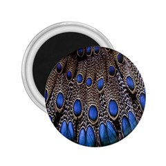 Feathers Peacock Light 2 25  Magnets