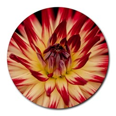 Bloom Blossom Close Up Flora Round Mousepads