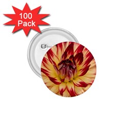 Bloom Blossom Close Up Flora 1 75  Buttons (100 Pack)