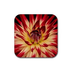 Bloom Blossom Close Up Flora Rubber Square Coaster (4 Pack)