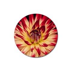 Bloom Blossom Close Up Flora Magnet 3  (round)