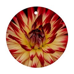 Bloom Blossom Close Up Flora Round Ornament (two Sides)