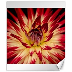 Bloom Blossom Close Up Flora Canvas 8  X 10