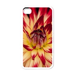 Bloom Blossom Close Up Flora Apple Iphone 4 Case (white)