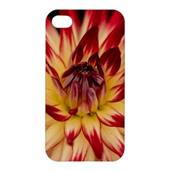 Bloom Blossom Close Up Flora Apple Iphone 4/4s Premium Hardshell Case