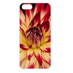 Bloom Blossom Close Up Flora Apple Iphone 5 Seamless Case (white)