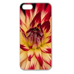 Bloom Blossom Close Up Flora Apple Seamless Iphone 5 Case (clear)