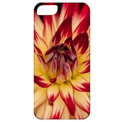 Bloom Blossom Close Up Flora Apple Iphone 5 Classic Hardshell Case