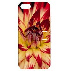 Bloom Blossom Close Up Flora Apple Iphone 5 Hardshell Case With Stand