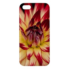 Bloom Blossom Close Up Flora Apple Iphone 5 Premium Hardshell Case