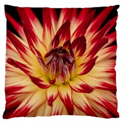 Bloom Blossom Close Up Flora Large Flano Cushion Case (one Side)