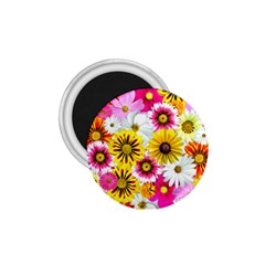 Flowers Blossom Bloom Nature Plant 1 75  Magnets