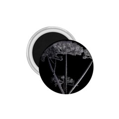 Dog Tube White Night Dark Ice 1 75  Magnets