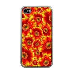 Gerbera Flowers Blossom Bloom Apple Iphone 4 Case (clear)