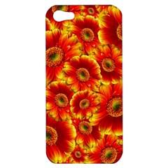 Gerbera Flowers Blossom Bloom Apple Iphone 5 Hardshell Case