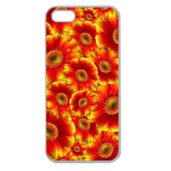 Gerbera Flowers Blossom Bloom Apple Seamless Iphone 5 Case (clear)