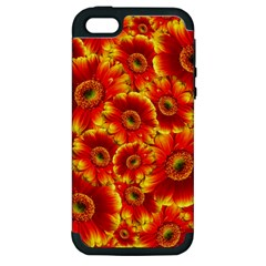 Gerbera Flowers Blossom Bloom Apple Iphone 5 Hardshell Case (pc+silicone)