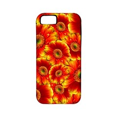 Gerbera Flowers Blossom Bloom Apple Iphone 5 Classic Hardshell Case (pc+silicone)