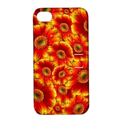 Gerbera Flowers Blossom Bloom Apple Iphone 4/4s Hardshell Case With Stand
