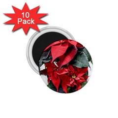 Star Of Bethlehem Star Red 1 75  Magnets (10 Pack)