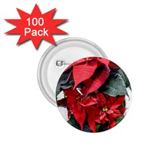 Star Of Bethlehem Star Red 1 75  Buttons (100 Pack)