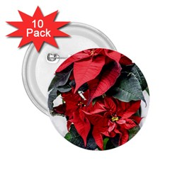 Star Of Bethlehem Star Red 2.25  Buttons (10 pack)