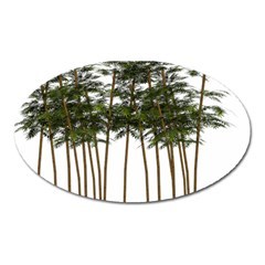 Bamboo Plant Wellness Digital Art Oval Magnet
