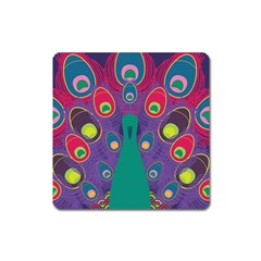 Peacock Bird Animal Feathers Square Magnet