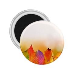 Autumn Leaves Colorful Fall Foliage 2 25  Magnets