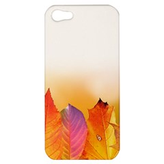 Autumn Leaves Colorful Fall Foliage Apple Iphone 5 Hardshell Case