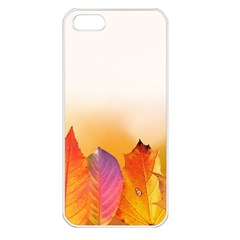 Autumn Leaves Colorful Fall Foliage Apple Iphone 5 Seamless Case (white)