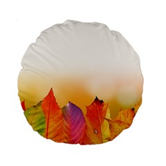 Autumn Leaves Colorful Fall Foliage Standard 15  Premium Round Cushions