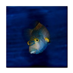 Fish Blue Animal Water Nature Tile Coasters