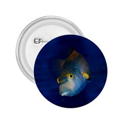 Fish Blue Animal Water Nature 2 25  Buttons