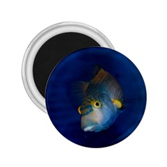 Fish Blue Animal Water Nature 2 25  Magnets