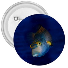 Fish Blue Animal Water Nature 3  Buttons