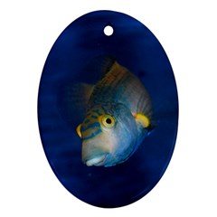Fish Blue Animal Water Nature Ornament (oval)