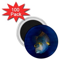 Fish Blue Animal Water Nature 1 75  Magnets (100 Pack)