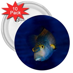 Fish Blue Animal Water Nature 3  Buttons (10 Pack)