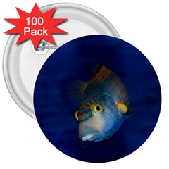 Fish Blue Animal Water Nature 3  Buttons (100 pack)