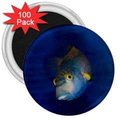 Fish Blue Animal Water Nature 3  Magnets (100 pack)