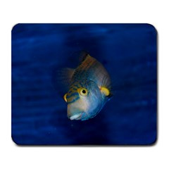 Fish Blue Animal Water Nature Large Mousepads