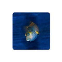 Fish Blue Animal Water Nature Square Magnet